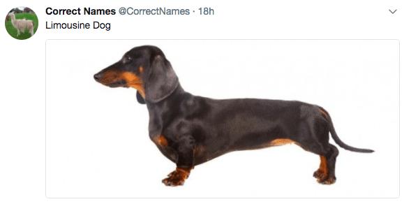 Limousine Dog