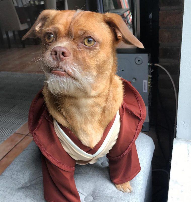 Dog Jedi